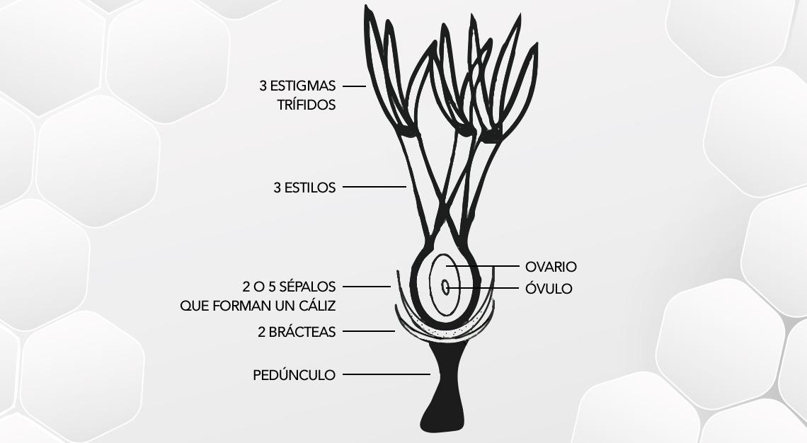 ciclo vegetativo del pistachero